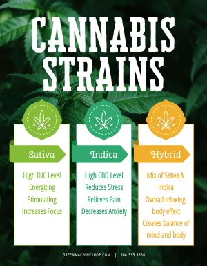 Weed Strains Flyer